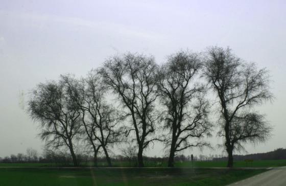 Öländska träd