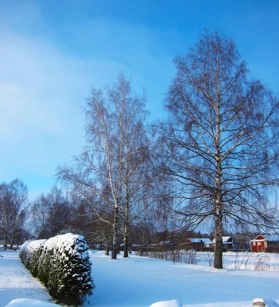 2013-01-31 Linköping 02