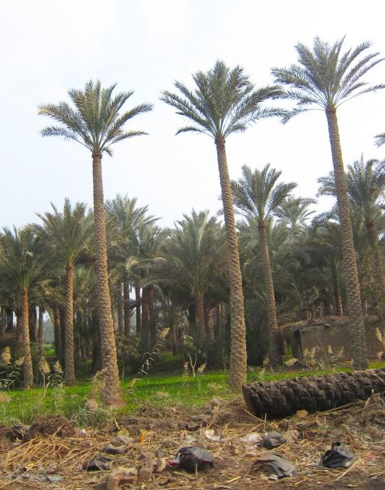 2013-04-03 Egypten dag 08 09