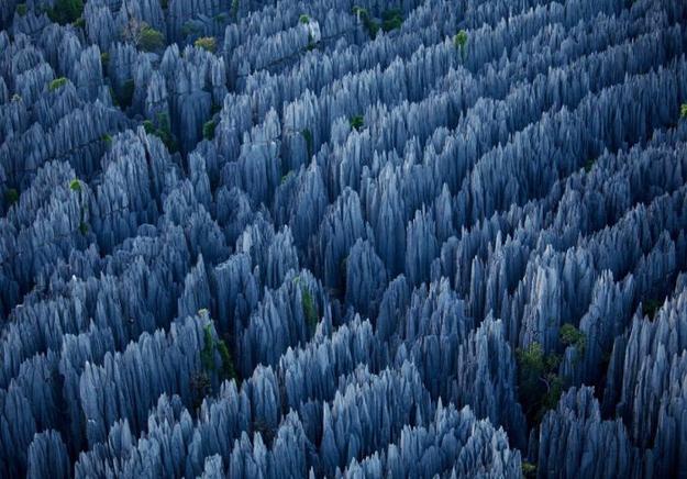 THE STONE FOREST, MADAGASKAR