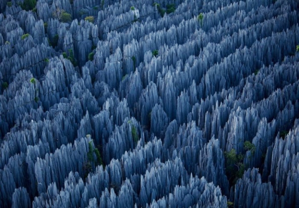 THE STONE FOREST, MADAGASKAR