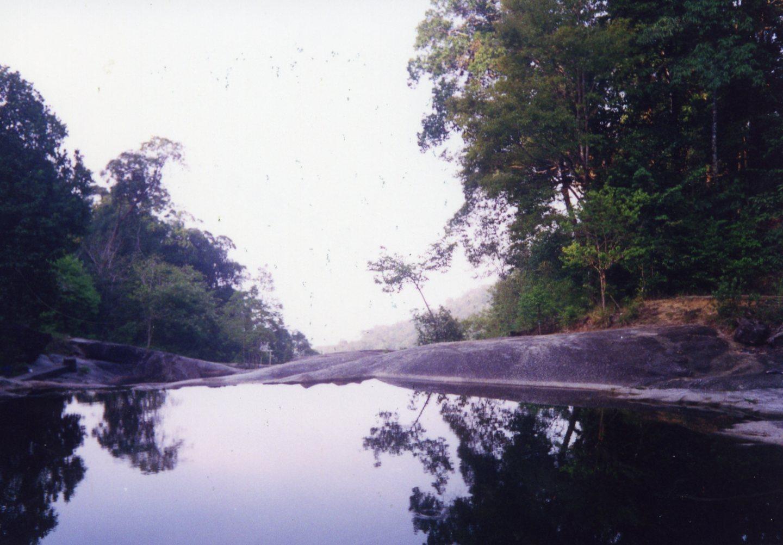 En djungel i Malaysia (Inskannat foto 1994-1998)