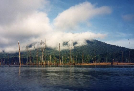 Flodliv (Inskannat foto 1994-1998)