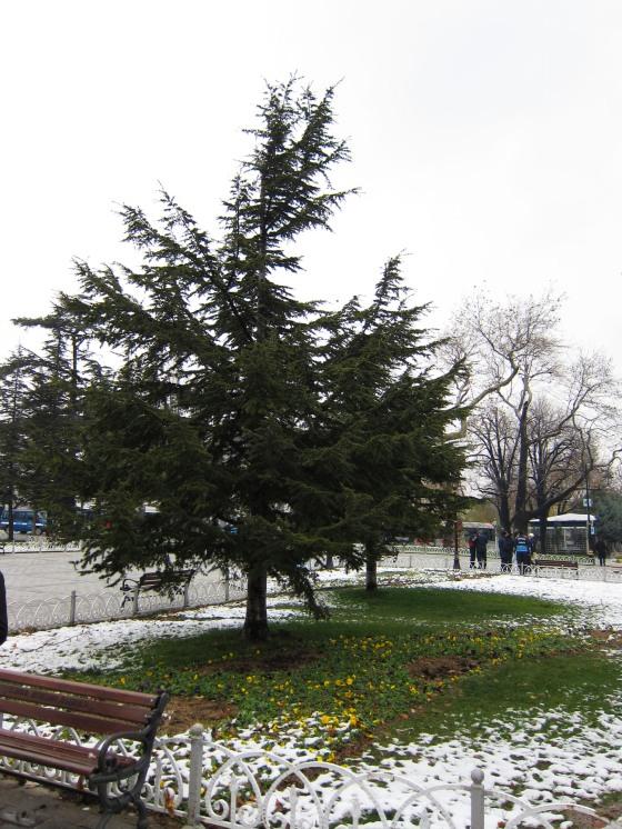 2012-12-21 Turkey 14